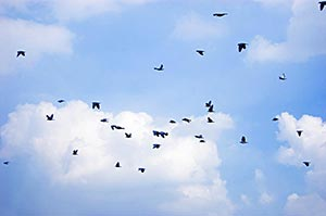 Adult Animal ; Animal Themes ; Animals ; Avian ; B